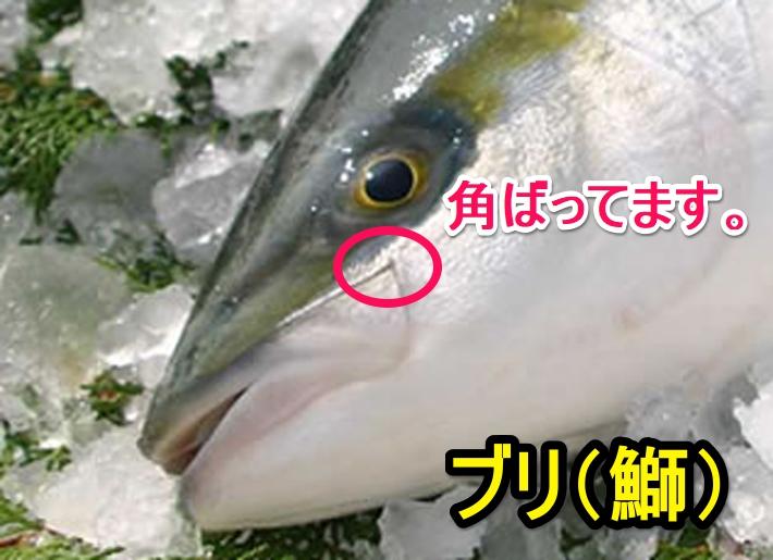 ブリ(鰤)の口角