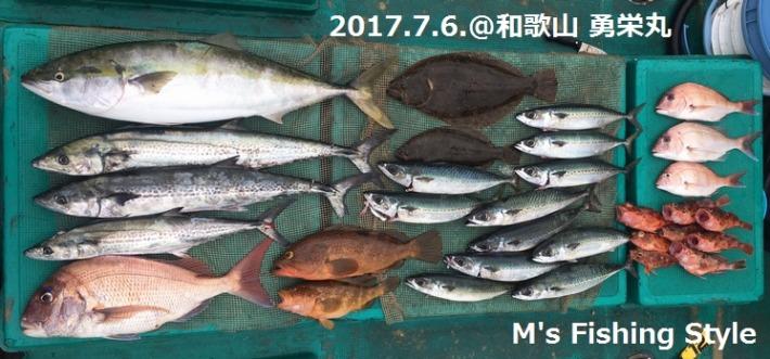 落とし込みサビキ釣りの釣果